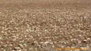 Ribera Del Deuro soil picture 1