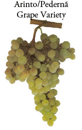 Arinto Grape Variety of Portugal