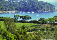 Cotes de Provence La Londe