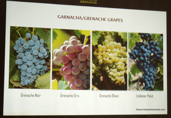 Garnacha Grenache Grape Varietals